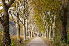 Grintweg met bomen in de herfst wordt gevoerd die stock fotografie