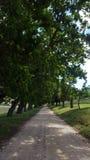 Grintweg onder eiken bomen Royalty-vrije Stock Fotografie