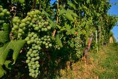 Grinzane Cavour, Piedmont, Italien Juli 2018 På foten av de himla- sikterna för slott lite varstans av vingårdarna arkivfoto