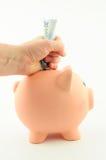 Grip pengarna från spargrisen Fotografering för Bildbyråer