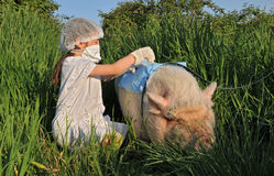 Gripe de la gripe de los cerdos Imagen de archivo libre de regalías