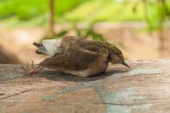 Grippe aviaire Images libres de droits