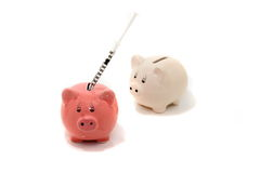 Grippe de porcs photographie stock libre de droits