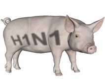 Grippe de porcs. illustration stock