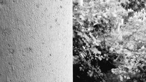 gris Fotografía de archivo