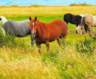 Gris, bahía y caballos negros Fotografía de archivo