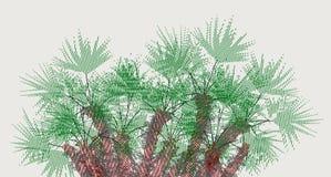 Gris brillante girado del palmetto 2, jerarquía de palmas imágenes de archivo libres de regalías