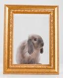 Gris décoratif de lapin dans un cadre de cadre d'or Photographie stock libre de droits