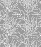 Gris de la alga marina del quelpo con textura Imagenes de archivo