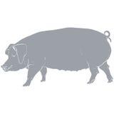 Gris del cerdo de la plantilla Imágenes de archivo libres de regalías