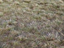 Gris del fondo de la hierba Textura de la hierba verde Fotos de archivo libres de regalías