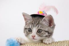 Gris el gato escocés rayado en un sombrero decorativo con una pluma Foto de archivo