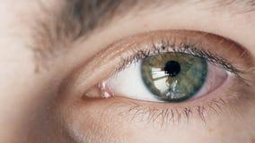 Gris, vert avec l'oeil humain jaune du jeune garçon regardant la caméra, fin