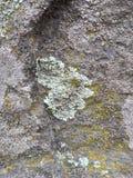 Gris, vert, noir, lichen sur la roche, combinaison symbiotique d'un champignon avec algues ou bactérie, fin, macro dans la chute  images stock