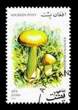 Grisette (Amanitopsis-vaginata), Paddestoelen serie, circa 2001 Royalty-vrije Stock Fotografie