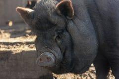 griskött och genteknik royaltyfria foton