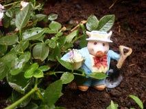 Grisköttträdgårdsmästare Arkivfoto