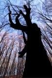 Grito de uma árvore imagem de stock