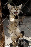 Gritos del gatito Imágenes de archivo libres de regalías