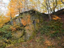 Gritstone outcrop in pennine valley autumn forest. In crownest woods near hebden bridge in calderdale west yorkshire Royalty Free Stock Image