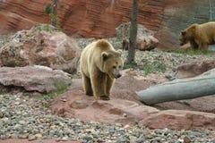 Griz and Mama Bear Stock Photo