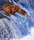 Grizly Bär bei Alaska Lizenzfreie Stockfotografie