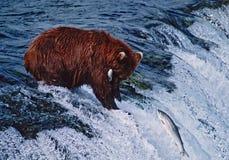Grizzly bear. With catch. Alaska Stock Photo