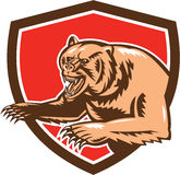 Grizzly Bear Angry Shield Retro Royalty Free Stock Images