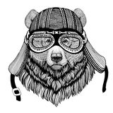 Grizzly bear Big wild bear Hand drawn image of animal wearing motorcycle helmet for t-shirt, tattoo, emblem, badge, logo Royalty Free Stock Photo
