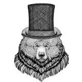 Grizzly bear Big wild bear wearing cylinder top hat Royalty Free Stock Images