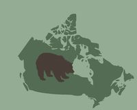 Grizzly bear in Canada Stock Photography