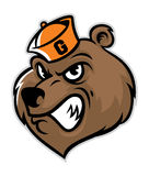 Grizzly bear head mascot Stock Image