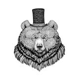 Grizzly bear Hipster style animal Image for tattoo, logo, emblem, badge design Royalty Free Stock Image