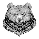 Grizzly bear Hipster style animal Image for tattoo, logo, emblem, badge design. Grizzly bear Hipster style animal Picture for tattoo, logo, emblem, badge design Stock Photography