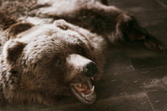 Grizzly bear pelt Royalty Free Stock Photography