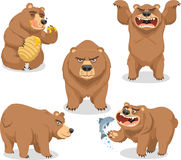 Grizzly bear set 1. Grizzly Brown Bear  illustration, with bear in five different situations like eating honey, standing roaring, four leg standing, side view Royalty Free Stock Image