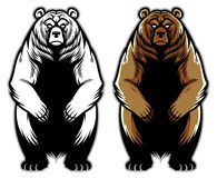 Grizzly bear. Vector of grizzly bear in one color and fullcolor vector illustration