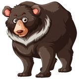 Grizzly bear on white background. Illustration royalty free illustration