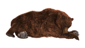 Grizzly Bear on White Royalty Free Stock Photography