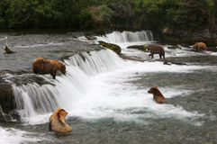 Grizzly bears, Brooks Falls. Stock Photos