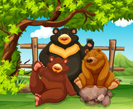 Grizzly bears sitting in the park Royalty Free Stock Images