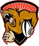 Grizzly or brown bear rugby player Stock Photo
