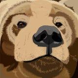 Grizzly niedźwiedzia twarz royalty ilustracja