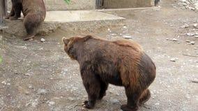 Grizzly Sittig zbiory
