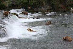 Grizzlybären Lizenzfreies Stockbild