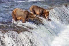 Grizzlybären von Katmai NP lizenzfreie stockfotografie