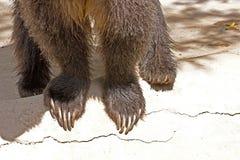 Grizzlybjörnfot och jordluckrare royaltyfri bild