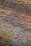 Grizzlys, Alaska royalty-vrije stock afbeelding