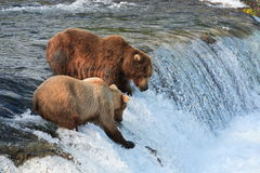 Grizzy Bear Fishing. This image was taken at Katmai National Park, Alaska Royalty Free Stock Photography