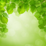 Grön bakgrund för sommar Arkivbild